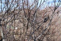 Pi?kny ptak z kolorowymi pi?rkami na drzewie fotografia stock