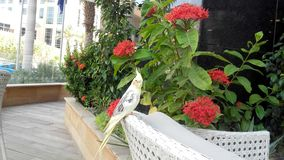 Piękny ptasi obsiadanie Obraz Royalty Free