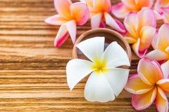 Piękny Pulmeria kwiat na drewno stole Obrazy Royalty Free