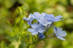 Piękny purpurowy kwiatu kwiat obraz stock