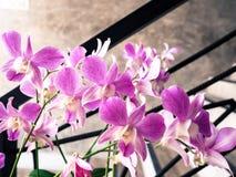 Piękny purpurowy storczykowy kwiat Zdjęcia Stock