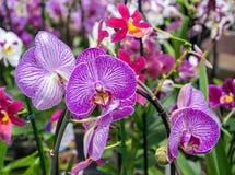 Pi?kny r??owy Storczykowy kwiat z zielonym kwiecistym t?em zdjęcie stock
