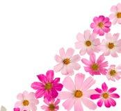 piękny rabatowy kwiecisty Zdjęcie Royalty Free