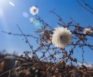 piękny rabatowy kwiecisty odosobniony pastelowy biel obrazy stock