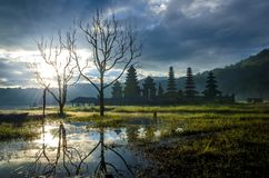 Piękny ranek przy Tamblingan Bali Obraz Stock