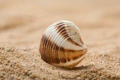 Piękny seashell Fotografia Stock