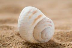 Piękny seashell Obrazy Royalty Free