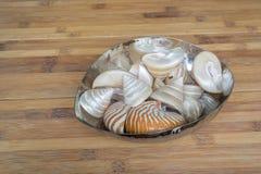 Piękny Seashell na drewnianym tle Obrazy Stock