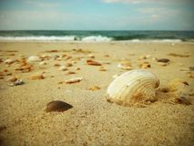 Pi?kny Seashell na pla?y obrazy royalty free