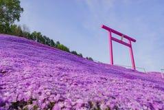 Piękny Shiba Sakura Zdjęcie Stock