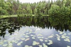 Piękny spokojny stawu krajobraz od Finlandia Fotografia Royalty Free