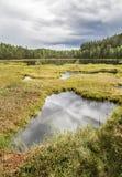 Piękny spokojny stawu krajobraz od Finlandia Zdjęcia Stock