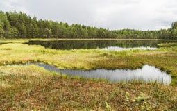 Piękny spokojny stawu krajobraz od Finlandia Obrazy Stock