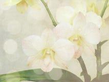 Piękny storczykowy kwiat z kolorów filtrami Zdjęcia Royalty Free