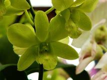 Piękny storczykowy kwiat z kolorów filtrami Fotografia Stock