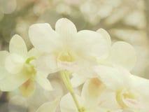 Piękny storczykowy kwiat z kolorów filtrami Obrazy Royalty Free