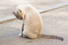Pi?kny szary bezdomny kot w ulicie zdjęcie stock