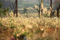 piękny trawa Obraz Royalty Free