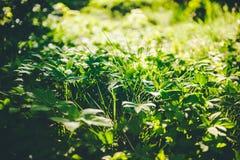 piękny trawnik Zdjęcia Stock