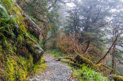 Piękny tropikalny las deszczowy Nowa Zelandia Zdjęcia Royalty Free
