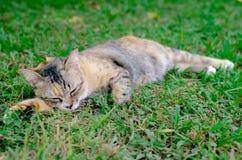 Pi?kny uroczy sleepyhead lamparta koloru kot relaksuje na trawie zdjęcie royalty free