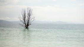 Piękny widok armenian jeziorny Sevan i osamotniony drzewo Zdjęcia Royalty Free