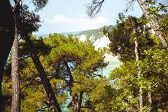 Piękny widok dziki odtwarzanie Zdjęcia Stock