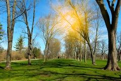 Piękny wiosna krajobraz w dzikim parku natura Zdjęcie Royalty Free
