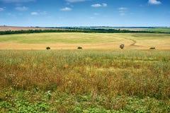 Piękny wiosna krajobraz, zieleni pole i jaskrawy chmurny niebo, Zdjęcie Stock