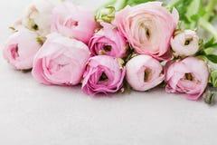 Piękny wiosny Ranunculus kwitnie na szarym tle rabatowy kwiecisty Pastelowy kolor Kartka z pozdrowieniami dla walentynek lub kobi Zdjęcie Stock