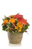 Piękny, wysoki kwiatu przygotowania, Obraz Royalty Free
