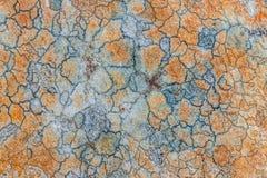 Piękny wzór liszaj na kamieniu Obraz Stock