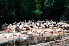 Pi?kny zbli?enie flaminga zwierz? w jawnych parkach obrazy stock