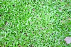 Piękny zielonej trawy wzór Zdjęcie Stock