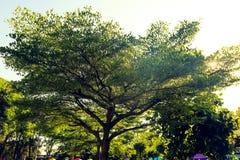 Pi?kny zielony drzewa, ro?liien, lasu i kwiat?w t?o w plenerowych ogr?dach, zdjęcia royalty free