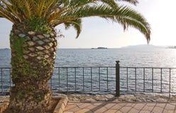 Piękny zielony drzewko palmowe Ibiza Fotografia Royalty Free