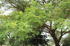 piękny zielony drzewo zdjęcie stock