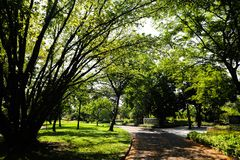 Pi?kny zielony drzewo, ro?liny, las i kwiaty w plenerowych parkach i ogr?dach zdjęcie royalty free