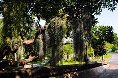 Pi?kny zielony drzewo, ro?liny, las i kwiaty w plenerowych parkach i ogr?dach obrazy royalty free