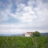 Piękny Zielony winnica Obraz Stock