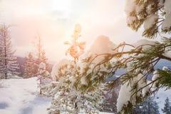 Piękny zima krajobraz Fotografia Royalty Free