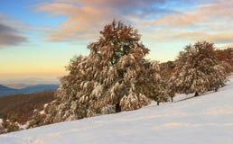 Piękny zima krajobraz w lesie Zdjęcia Royalty Free