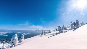 Pi?kny zima krajobraz z ?niegi zakrywaj?cymi drzewami caucasus Georgia gudauri g?r zima zbiory