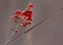Piękny zima kwiat Zdjęcia Stock
