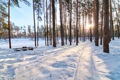 Piękny zima las zdjęcia royalty free