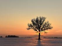 Piękny zima wieczór samotne drzewo obrazy stock
