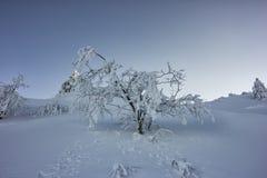 Piękny zimy drzewo Obrazy Stock