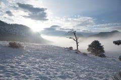 Piękny zimy Kolorado ranek zdjęcia royalty free