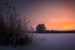 Piękny zimy landscape obraz royalty free