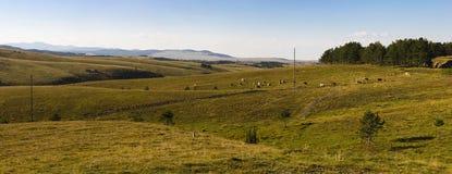 Piękny Zlatibor panoramy halny widok obrazy stock